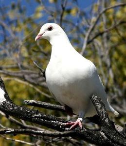 Badr Jamal took the shape of a white dove