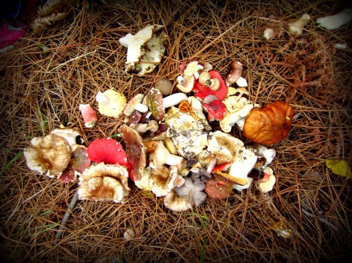 Mushroooomssss!!!