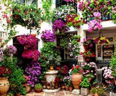 flowers_courtyard_cordoba